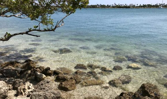 Clear water along Biscayne Bay at Oleta River State Park. (Photo: Bonnie Gross)