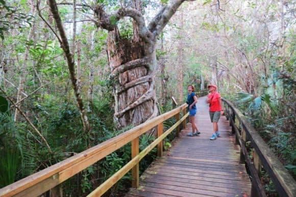 Things to do in Marco Island: Stroll the Big Cypress Bend Boadwalk off the Tamiami Trail. (Photo: David Blasco)