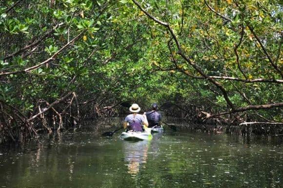 oleta mangrove tunnel Oleta River State Park feels like island getaway in Miami urban sprawl
