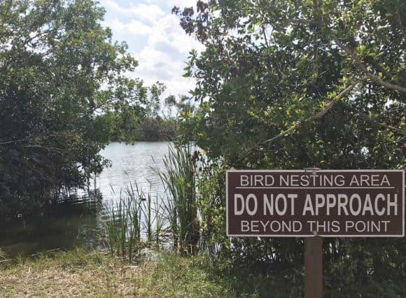 Paurotis Pon at Everglades National Park. (Photo: Bonnie Gross)