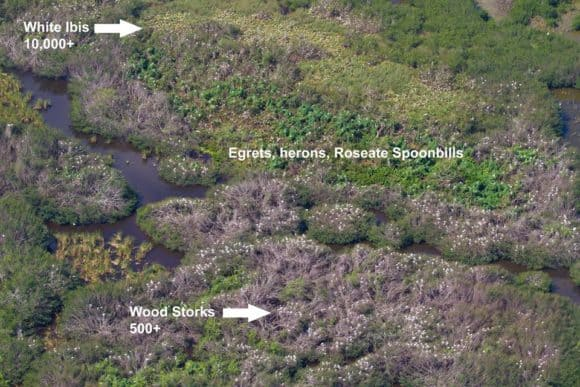 Aerial view of super colony of nesting birds. Photo courtesy Everglades National Park.