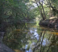 Alafia River at Alderman's Ford Park.