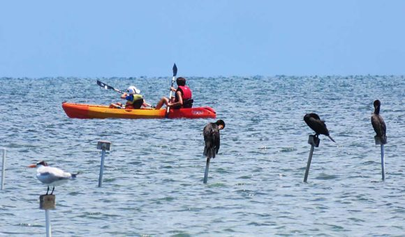 Birds on pilings. Kayaking to Indian Key Historic State Park off Islamorada