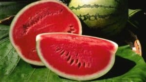 watermelon 600x450 Harvest Festivals, Rodeos, Agritourism Events in Florida
