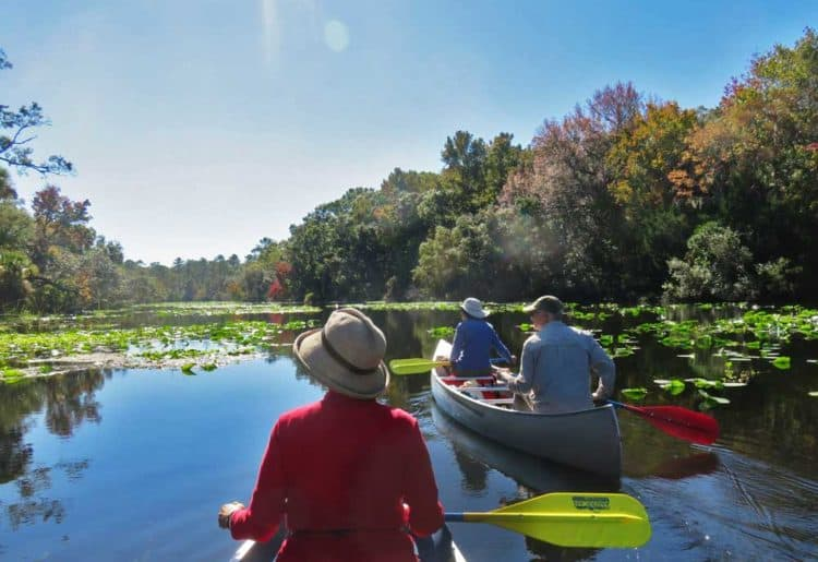 Alexander Springs in Ocala National Forest offers easy scenic paddling with lots of wildlife.
