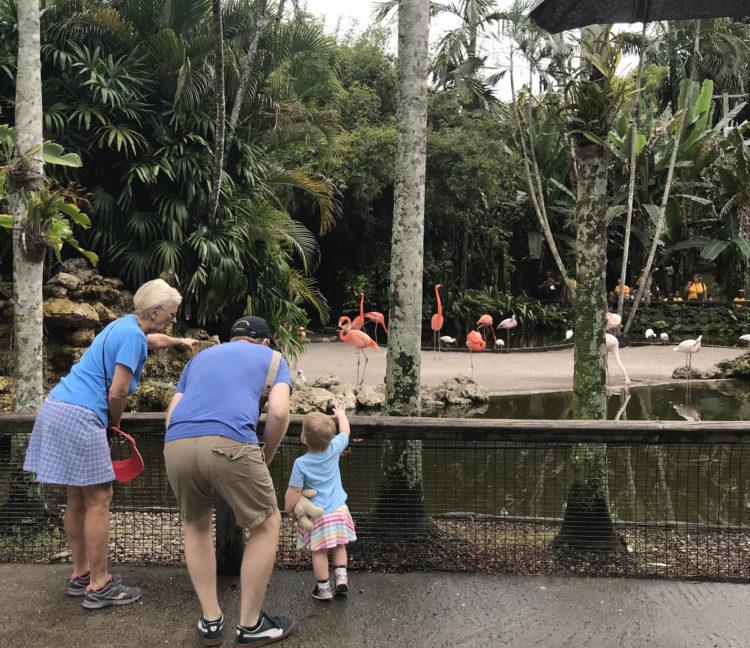 Flamingo Gardens in Davie: The flamingo pond makes the iconic bird easy to view. (Photo: David Blasco)