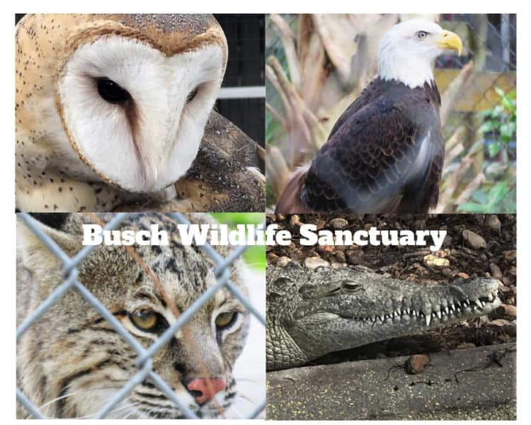 Animals at Busch Wildlife Sanctuary. (Photos: David Blasco & Bonnie Gross)