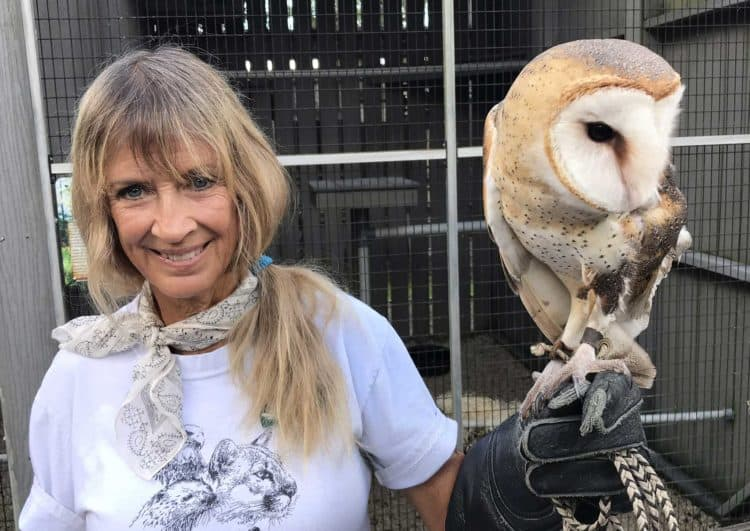 A volunteer at Busch Wildlife Sanctuary presents an injured barn owl at a program. (Photo: Bonnie Gross)
