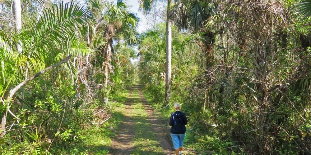 All the roads in Fakahatchee Strand are former logging roads used to cut down what once a vast cypress forest with trees hundreds of years old. Logging in the '40s and '50s. (Photo: Bonnie Gross)