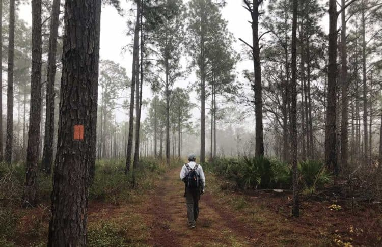 A foggy morning made for magical views along the trails of Lake Louisa State Park in Clermont. (Photo: Bonnie Gross)
