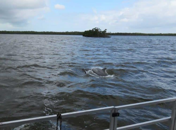 houseboat dolphin A houseboat adventure in Everglades National Park