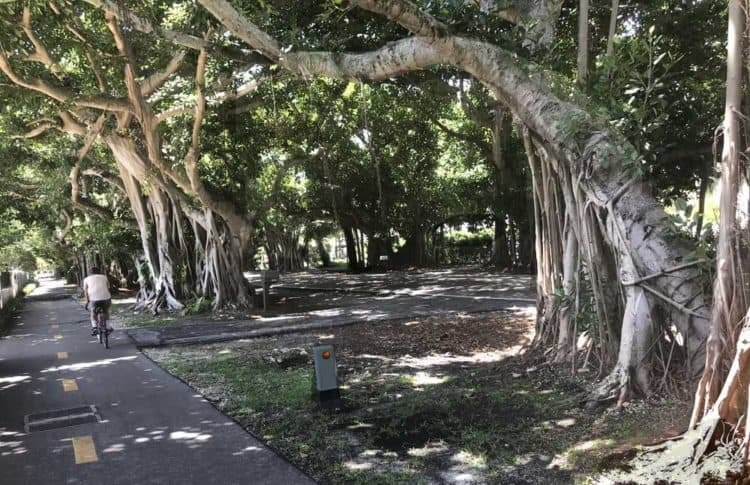 A favorite South Florida bike trail: Old Cutler Trail through beautiful Coral Gables.