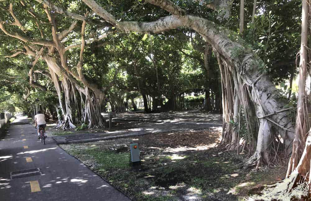 Old Cutler Trail. (Photo: Bonnie Gross)