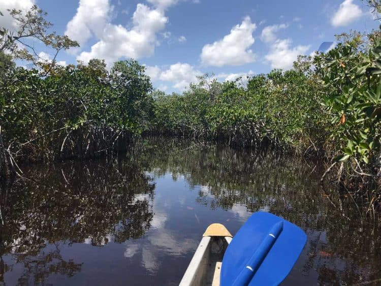 Everglades National Park Hell's Bay Kayak Trail. (Photo: Bonnie Gross)