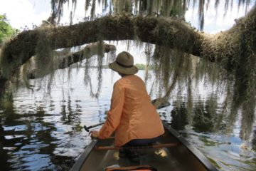 We paddled north along the eastern shore of the St. Johns from Welaka and enjoyed the view of boat houses and residences but the really beautiful part is the undeveloped shoreline, lined with large cypress trees, live oak trees, tall longleaf pines and lots and lots of Spanish moss draping everything.