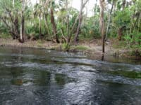 hrsp rapids Hillsborough River State Park offers a wilderness experience not far from Tampa