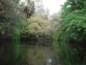 hrsp rivertrees Hillsborough River State Park offers a wilderness experience not far from Tampa