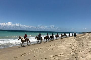 horseback riding on hutchinson island