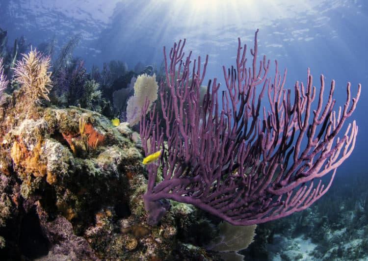 coral reef key largo