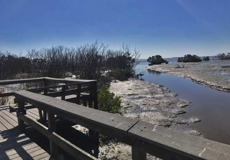 The boardwalk leading out to Florida Bay on the Snake Bight Trail near Flamingo in Everglades National Park. (Photo: Bonnie Gross)