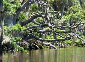 frogcreek fallenoak Frog Creek: Little-known Tampa Bay kayak trail