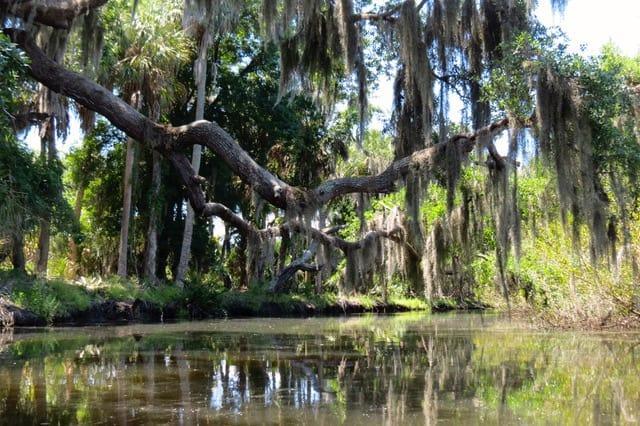 frogcreek moreoaks Frog Creek: Little-known Tampa Bay kayak trail