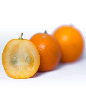 Kumquat January Events in Florida