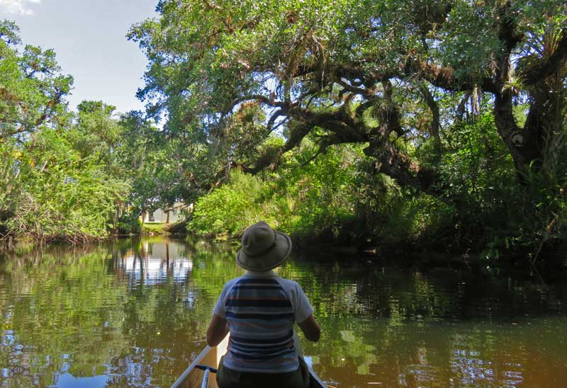Telegraph Creek, a tributary of the Caloosahatchee River near Fort Myers (Photo: David Blasco)