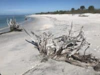 Cayo Costa florida state parks