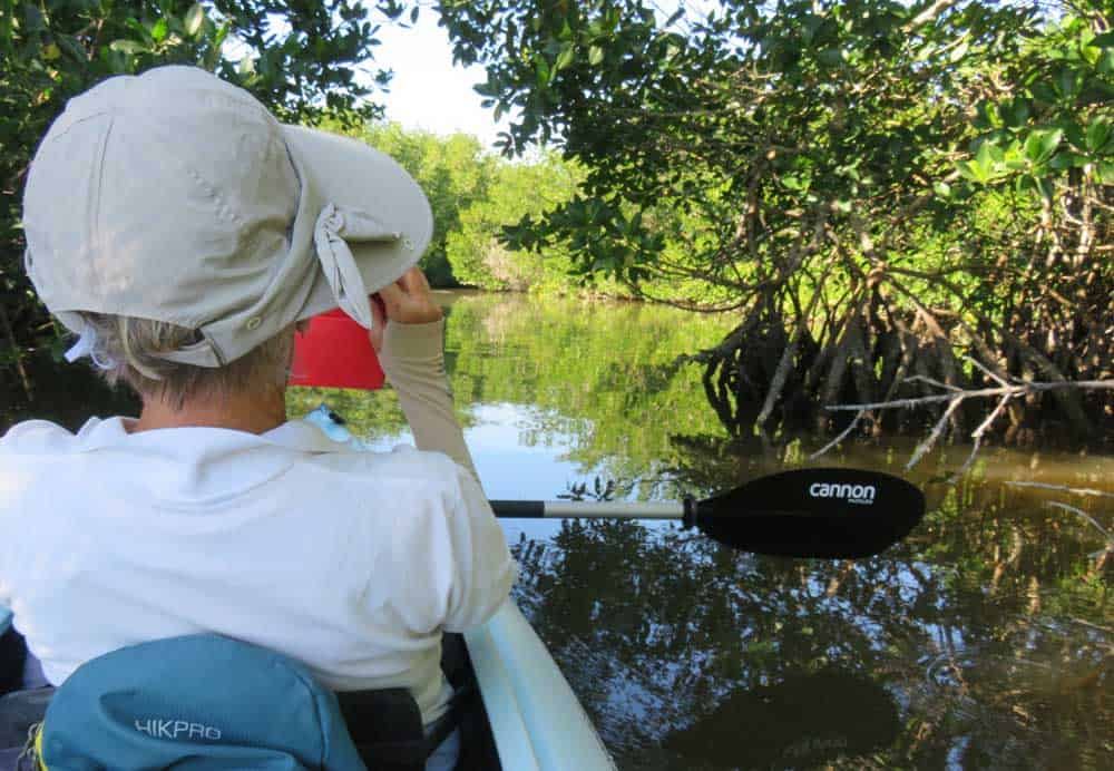From Cabbage Key, a great kayak destination is Cayo Costa, which you reach by paddling through a mangrove tunnel at Murdock Bayou. (Photo: David Blasco)
