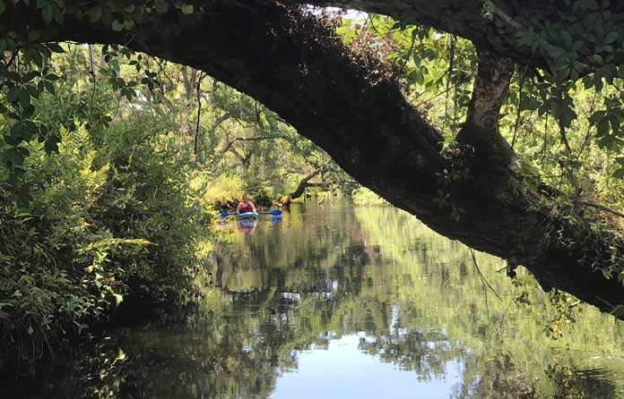 Kayakers along Telegraph Creek, a tributary of the Caloosahatchee River. (Photo: Bonnie Gross)