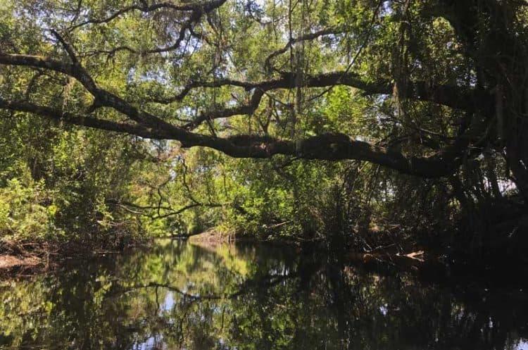 Telegraph Creek along the Caloosahatchee River near Fort Myers