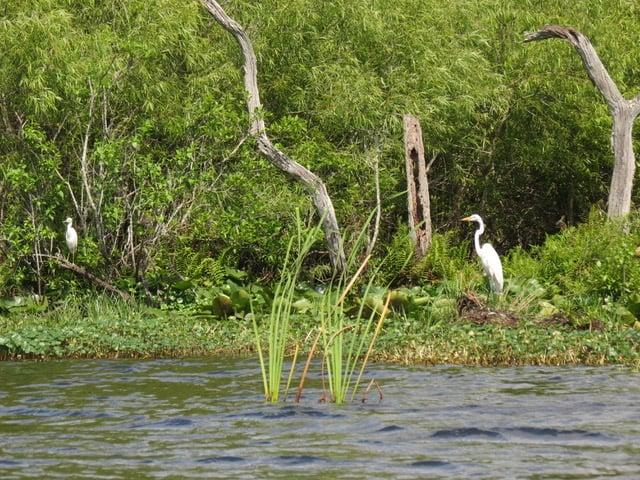 Egret at Deer Prairie Creek