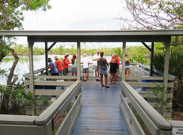 Blue Hole viewing area at National Key Deer Refuge. (Photo: David Blasco)
