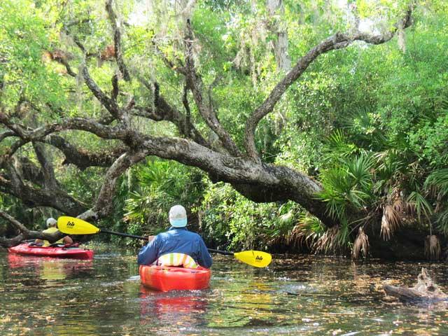 Kayaking Deer Prairie Creek in North Port.