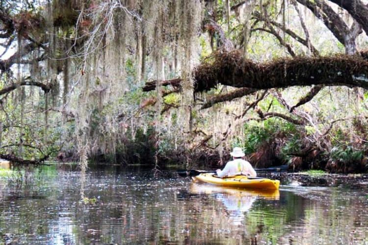 """Deer Prairie Creek is a pristine, quiet, shadded paddle with loads of """"Old Florida"""" charm."""