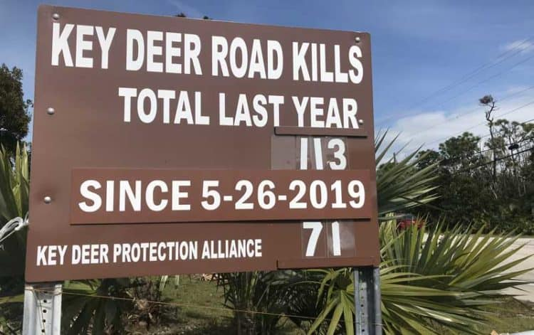 "Traffic in Big Pine Key endangers the key deer. The ""death toll"" sign illustrates the danger. (Photo: Bonnie Gross)"