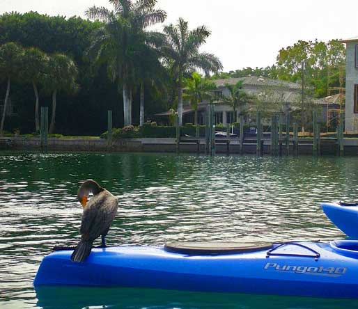 A cormorant hitches a ride on a kayak at the Lido Key Mangrove Trail. (Photo: Deb and Ed Higgins.)