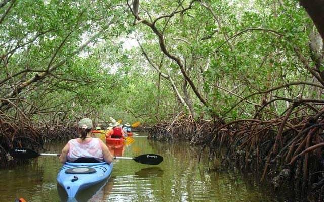 Mangrove tunnels at Lido Key Mangrove Trail. (Photo: Deb and Ed Higgins.)