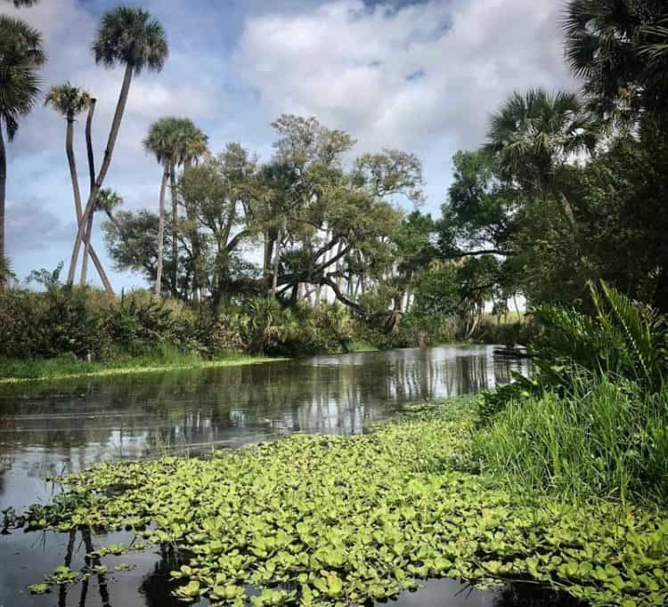 Ten Mile Creek view, one of the places for kayaking St. Lucie River waterways. (Photo: Bonnie Gross)