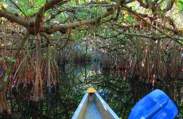 Best Everglades kayaking: Turner River Kayak Trail, Big Cypress National Wildlife Refuge. (Photo: Bonnie Gross)