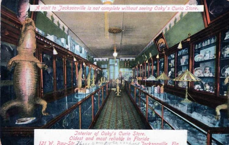 Oskys Curio Shop in Jacksonville, postmarked 1915.