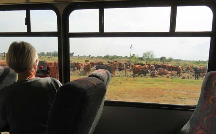 The free cattle ranch tour is by bus. (Photo: David Blasco)