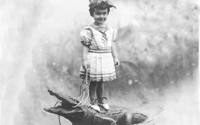 girl on gator square Baby Alligators for Sale! When gators were souvenirs