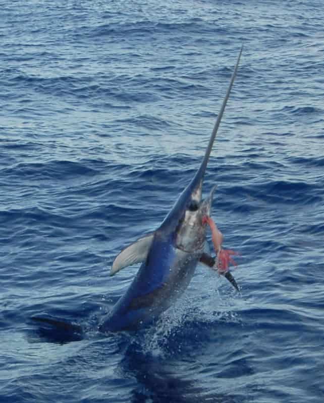 swordfish florida keys