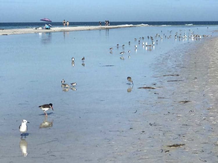 Anna Maria Island: Things to do include strolling the wide, white-sand beach full of seabirds.