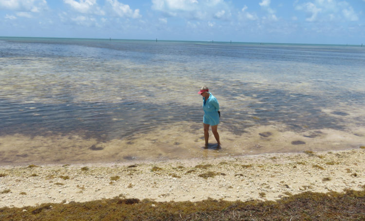 The beach at Curry Hammock State Park. Like other state park beaches in the Florida Keys, seaweed is left on the beach because it helps build up the coastal shoreline. (Photo: David Blasco)