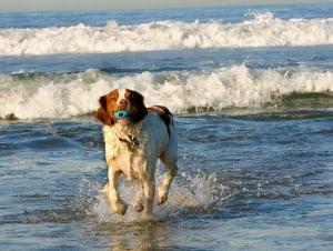 Brohard Park Dog Beach Venice Florida