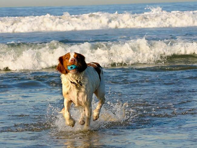 dog friendly beaches in florida Brohard Park Dog Beach Venice Florida