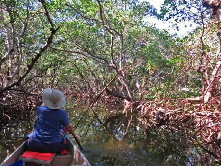 Inside Emerson Point Preserve in Palmetto, the kayak trail starts out travelling through pretty mangrove tunnels. (Photo: David Blasco)
